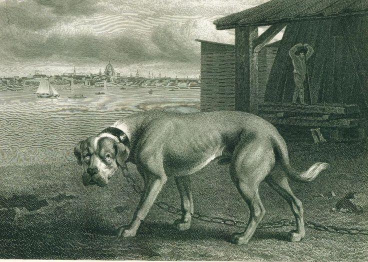 ANTIQUE Engraving Print 1804 Mastiff Dog by REINAGLE