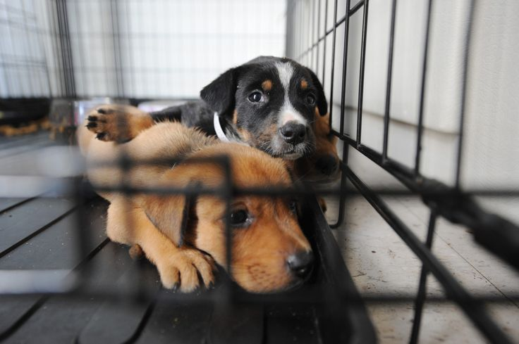 Despite the fact that nearly 62 percent of Americans have a pet, there are still more than 70 million homeless dogs and cats living in the U.S. So can you ever justify breeding dogs?</p>