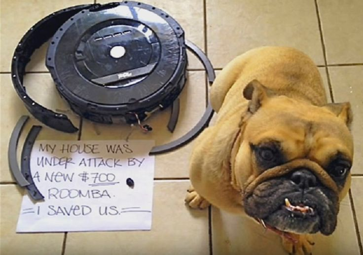 13 Funny 'Dog Shaming' Pictures That Pet Owners Can Totally Relate To!