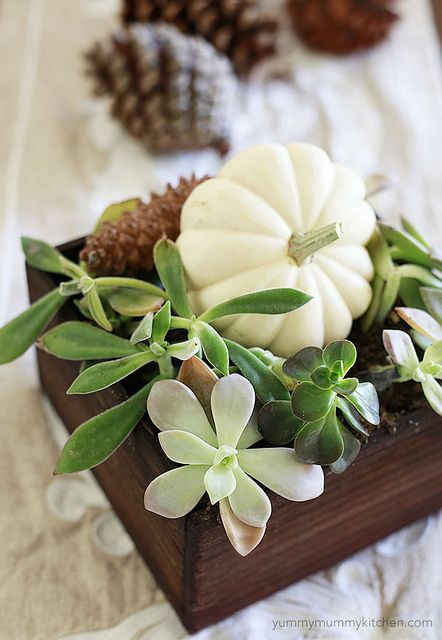 Centerpieces of simple succulents, white pumpkin & pinecones = great addition to any autumn event!