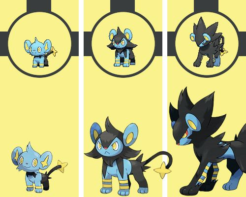 Shinx <3 Luxio <3 Luxray <3   #Pokemon