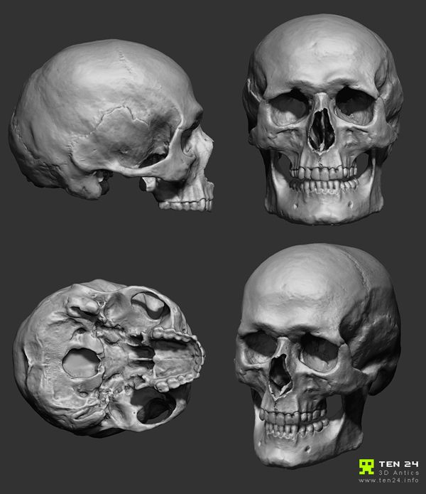 Skull Scan by Chris Rawlinson, via Behance