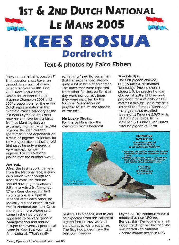 Racing pigeon pictorial | Website Kees Bosua