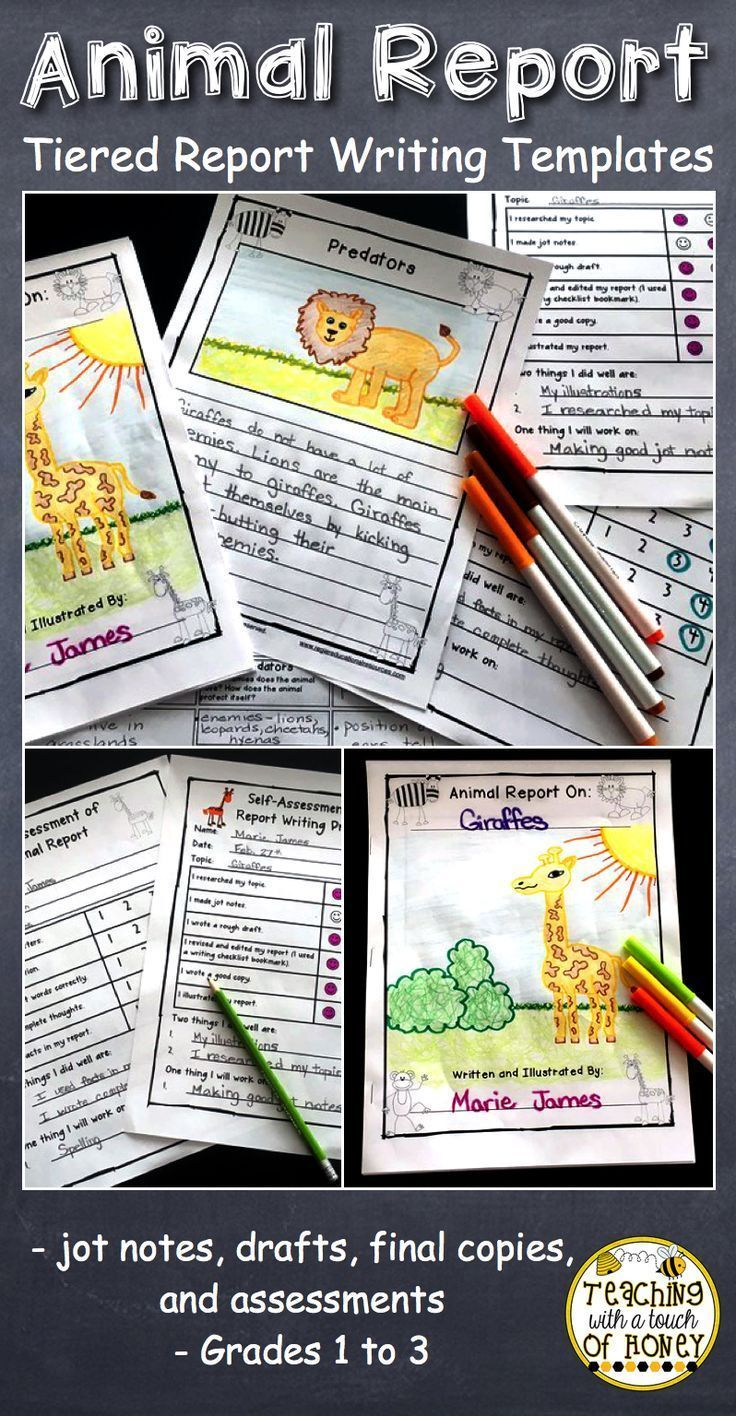 Animal reports are fun, informative writing activities for kids! Provide students in first grade, 2nd grade, and 3rd grade with the differentiated animal report templates. This package of printables provides a variety of writing templates that students can use as they develop their informational writing skills. These templates support students as they work through the writing process from making jot notes to creating their drafts and final copies. #animalreport #teachingwithatouchofhoney