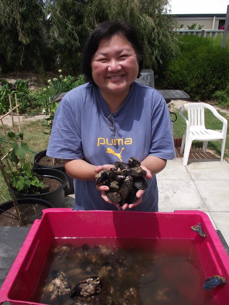 Mussels collected in Rockingham : http://www.wanowandthen.com/fishing.html