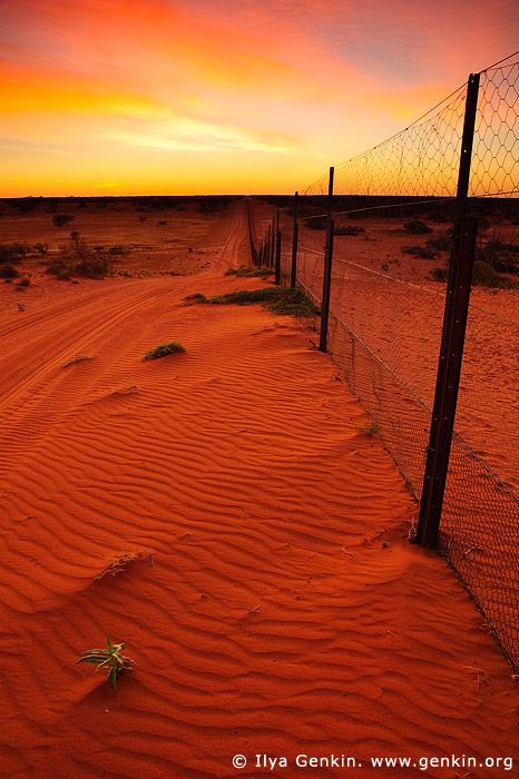 Dingo Fence near Cameron Corner at Sunrise, Cameron Corner, NSW/QLD/SA, Australia.