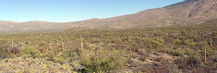 Arizona: Saguaro Park