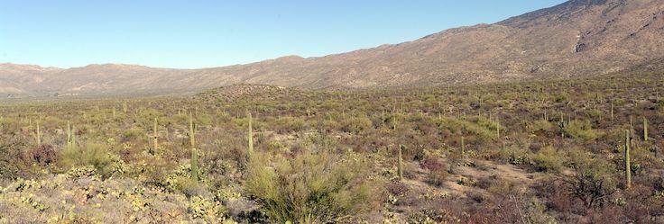 Arizona: Saguaro Park
