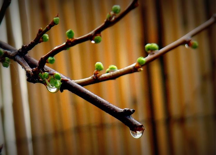 Rainny Blossoms