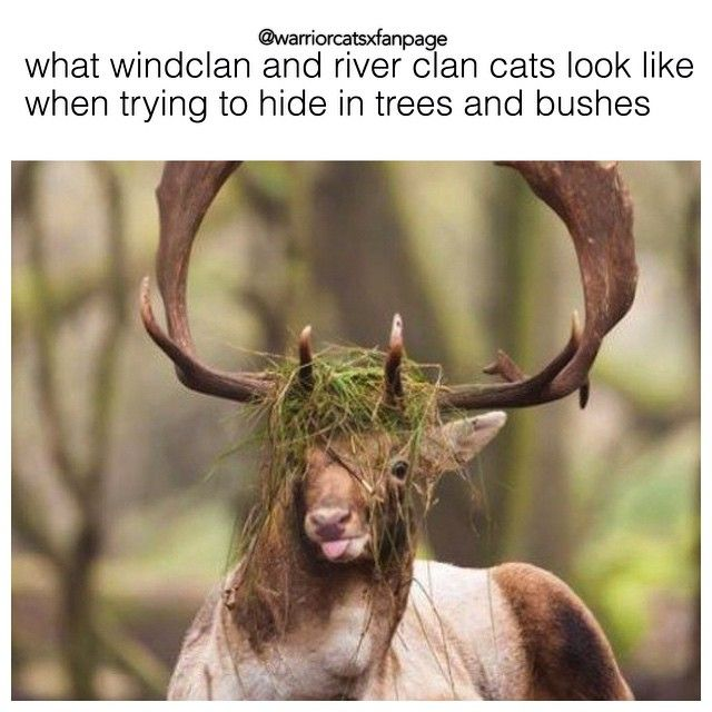 Which Dawn Of The Clans Warrior Cat Are You: 1000+ Ideas About Warrior Cats Funny On Pinterest