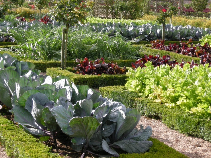 17 best images about edible gardening inspiration and ideas on pinterest