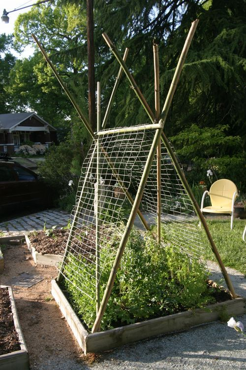 Making a Trellis for Peas and Beans from Bamboo