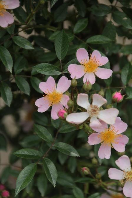 花フェスタ記念公園へ行ってきました。 その⑦ - 綺麗な花には棘があるかもしれない…