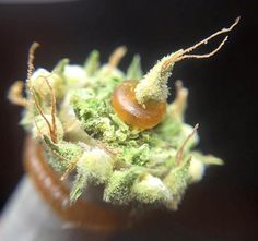 Not sure I could even light this, it's art!!  Repinned by Fun Weed Pics @funweedpics