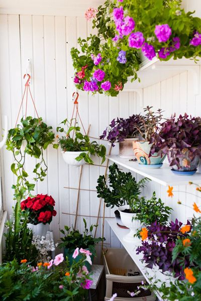 shelves of plants {an unusual garden set up}