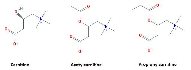 L-Carnitine - Scientific Review on Usage, Dosage, Side Effects | Examine.com