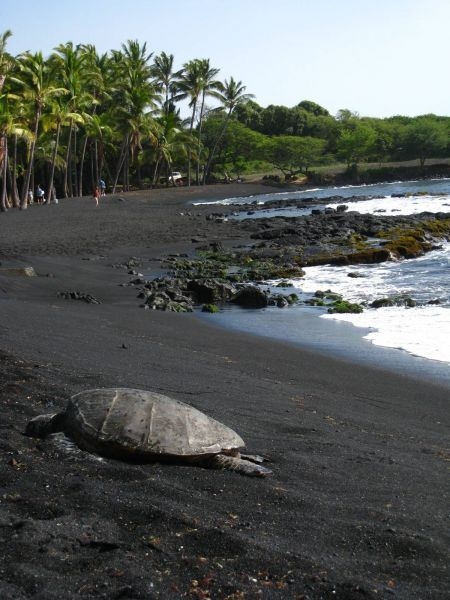 Punalu'u Black Sand Be...