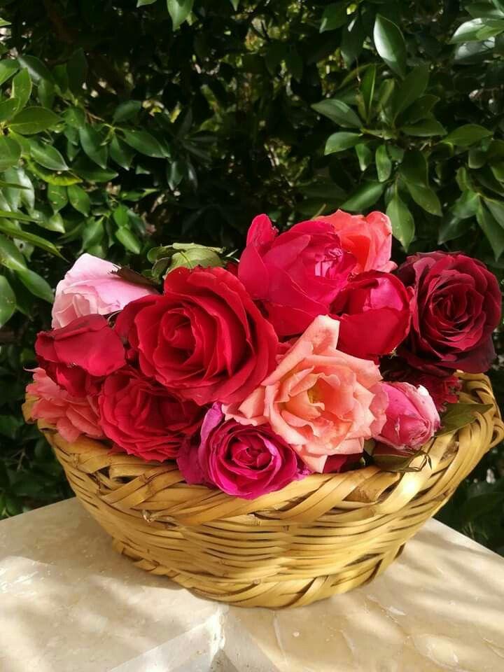 من سورية سلة ورود Flowers Rose Flower Red Roses