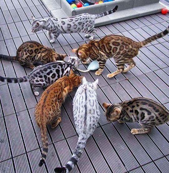 free kittens louisville ky
