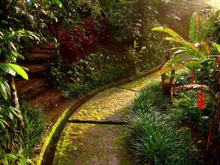 Follow the light - it will guide you on your way through paradise... #nature #plantation #flowers #jungle #beautiful #amazing #beauty #summer #spring #paradise #bali #island #islandofgod #travel #holiday #vacation #explorebali #hotel #resort #luxury