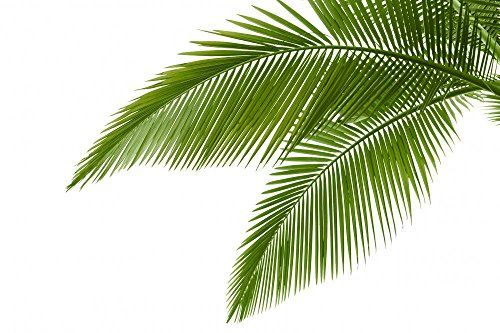 Palm Leaf Themed Tropical Home Decor