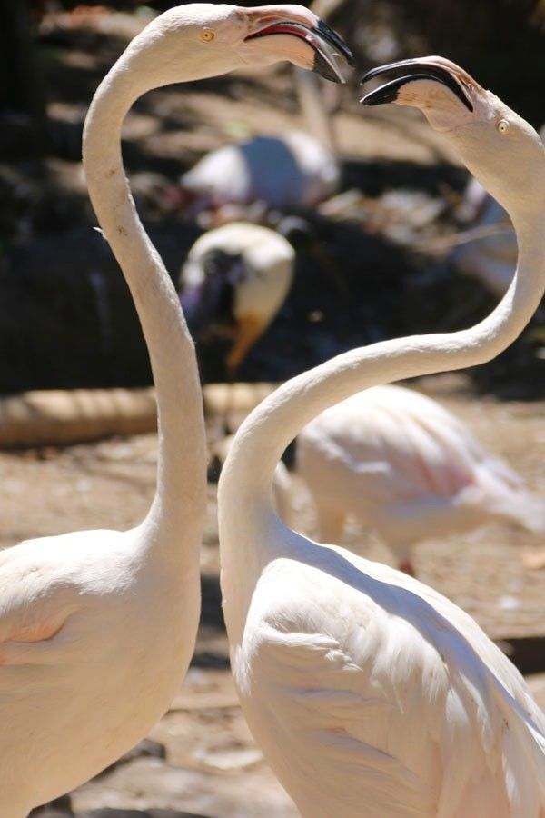 World of Birds, Hout Bay Cape Town