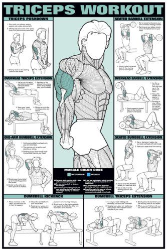 """Amazon.com : Triceps Workout 24"""" X 36"""" Laminated Chart : Fitness Charts And Planners : Sports & Outdoors"""