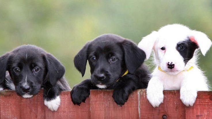 Hundeerziehung: Das sind die 5 schlimmsten Fehler - Frauenzimmer.de