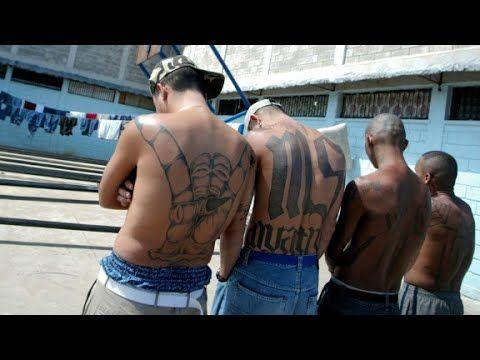 MS-13 gang members: Trump makes us stronger - USANEWS.CA