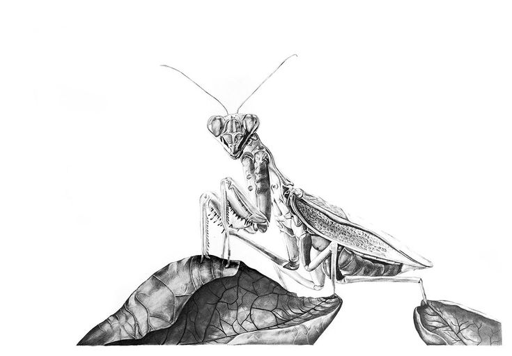 Kendall-Leigh Nash | Pray-mantis | Buy original Art Online | StateoftheART