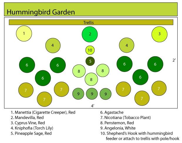 25 Best Images About Hummingbird Garden On Pinterest | Gardens