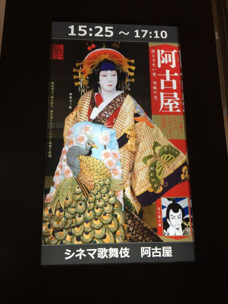 シネマ歌舞伎「阿古家 」