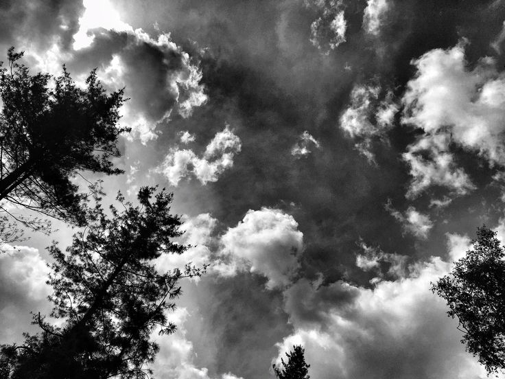 "In the forest 3  ""Everybody needs inspiration"" #PietroParodi #blackandwhite"