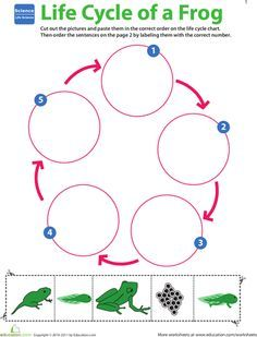 Worksheets: Life Cycle of a Frog. While I am against worksheets in the early learning classroom, I do, occasionally use them as a group activity. I love this visual for talking about the lifecycle of a frog.