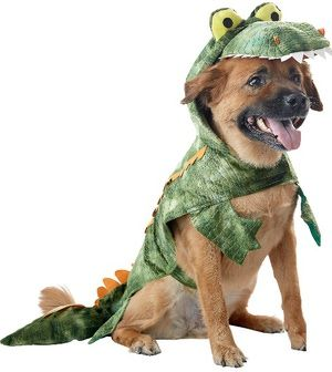Bat Costume for Dogs: Alligator Halloween Costume for Dogs