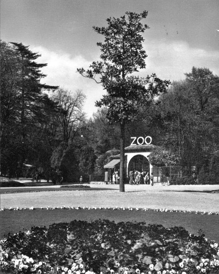 Durante la seconda metà dell'800 nei Giardini Pubblici di Porta Venezia iniziarono a comparire gabbie con animali esotici e voliere per uccelli tropicali. Le nuove attrazioni ebbero un clamoroso successo tanto che nel 1923 venne inaugurato nell'angolo nord occidentale degli stessi Giardini il nuovo zoo di Milano. Per decenni rimase una delle massime attrazioni per i bambini milanesi. Leoni tigri giraffe orsi polari pinguini zebre leopardi decine di rapaci e pappagalli... negli anni 60 lo…