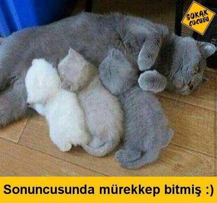 Rukiye Demir - Google+