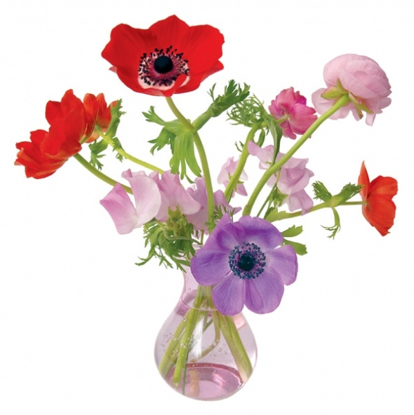 FLAT FLOWER MIXED POPPY X LARGE