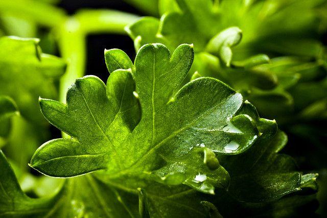 a petrezselyemzöld képes elpusztítani a tüdőrákos sejtek mintegy 86%-át. a  vesekő kezelésére,sok K-, C-, A- és B-vitamint tartalmaz, és nagy a klorofill és esszenciális aminósav tartalma is. Erős antioxidáns, szabályozza a vérnyomást, és hatékony gombaölő
