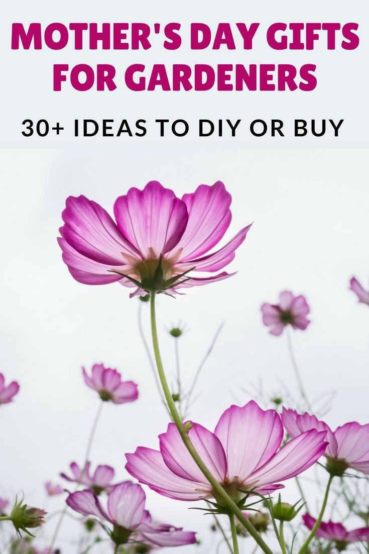 Mothers Day Gifts For Gardeners 30 Ideas To Diy Or Buy Text Overlaying Image Of Purple Flowers And Grey Sky