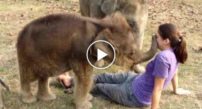 """Confuso Elefante Bebé Não Percebe Que a Sua Amiga Humana Tem Uma """"Tromba"""" Diferente Da Dele"""