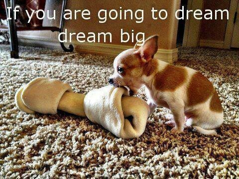 """Little dog biting a huge bone. """"If you are going to dream, dream big!"""""""