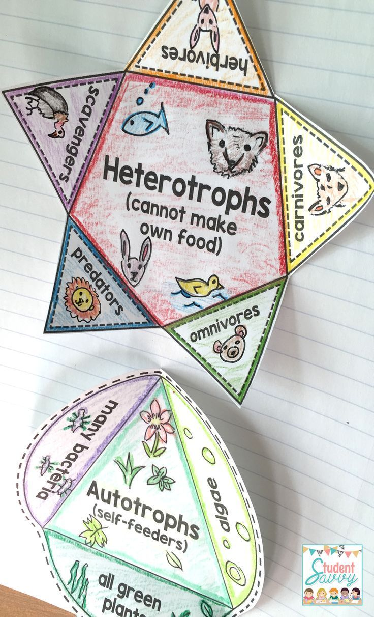 I love this ecosystem interactive notebook for my students. It contains food webs, food chains, energy pyramids, and more. Part of the Earth Science interactive notebook series. Great interactive journal projects for 4th grade - middle school.