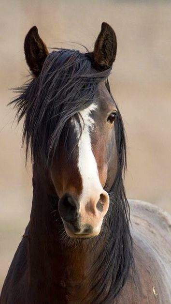 horsesornothing: Wild Stallion by Desert Horse on Flickr. (Faith Hope Love) download more for free: https://play.google.com/store/apps/details?id=com.andronicus.coolwallpapers