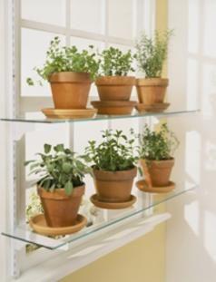 growing herbs indoors - Google Search