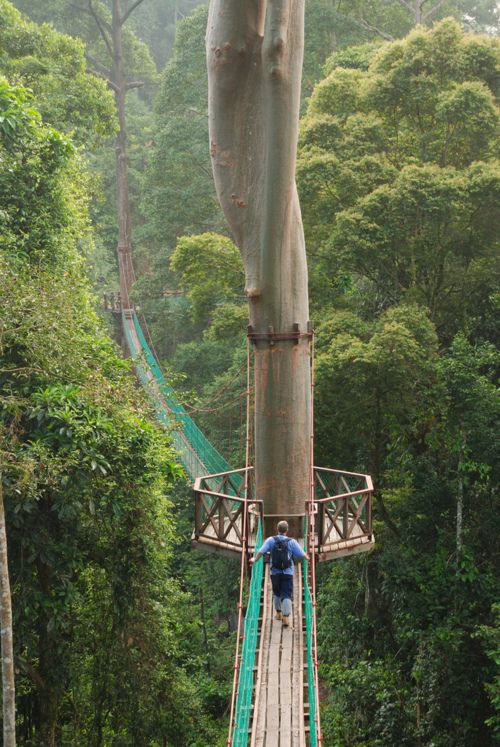 Danum Valley Canopy Walkway, Malaysia  ::  300-meter-long (985 ft) and 27-meter-high (90 ft) canopy walkway  ::  This amazing canopy walk is one of the best in the world where you explore the canopy of the forest reserve in Danum, Sabah, Borneo.