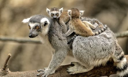 7 Adorable Videos of Animal Moms Rescuing Their Babies