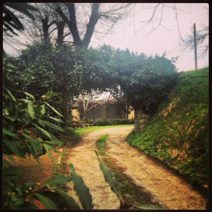 #path #green #nature