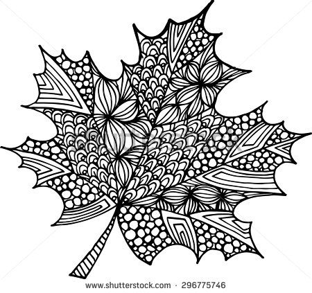 Vector hand drawn maple leaf illustration. Doodle ornamental monochrome outline maple leaf drawing