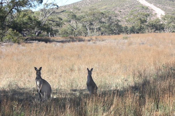 First Impressions: An American Down Under - Find our Sydney Guide at FathomAway.com #Australia